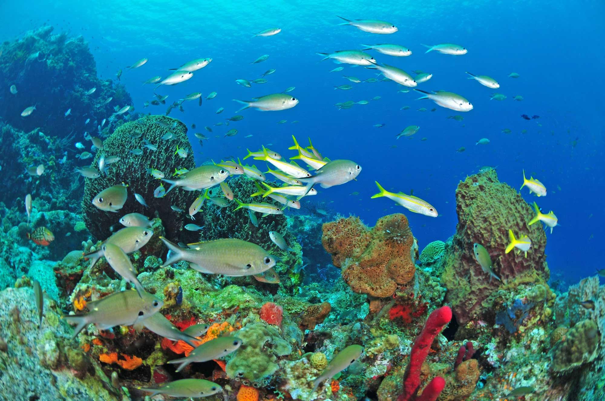 Bien-aimé Martinique - Best Caribbean Islands, Caribbean Tourism, Best  WV31