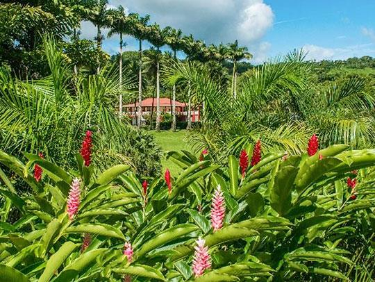 Habitation Saint-Etienne Martinique