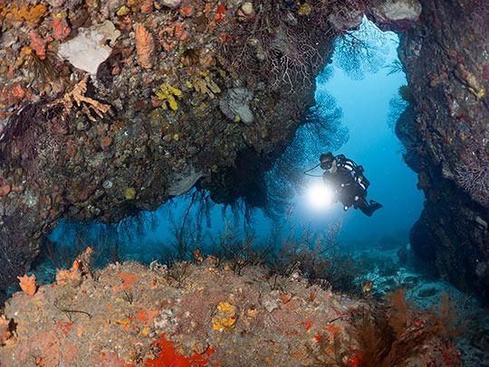 Scuba Diving in Martinique